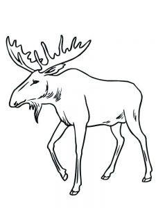 Moose Coloring Pages Royalty Free