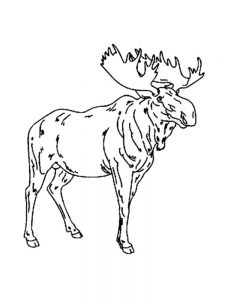 Moose Coloring Pages To Print