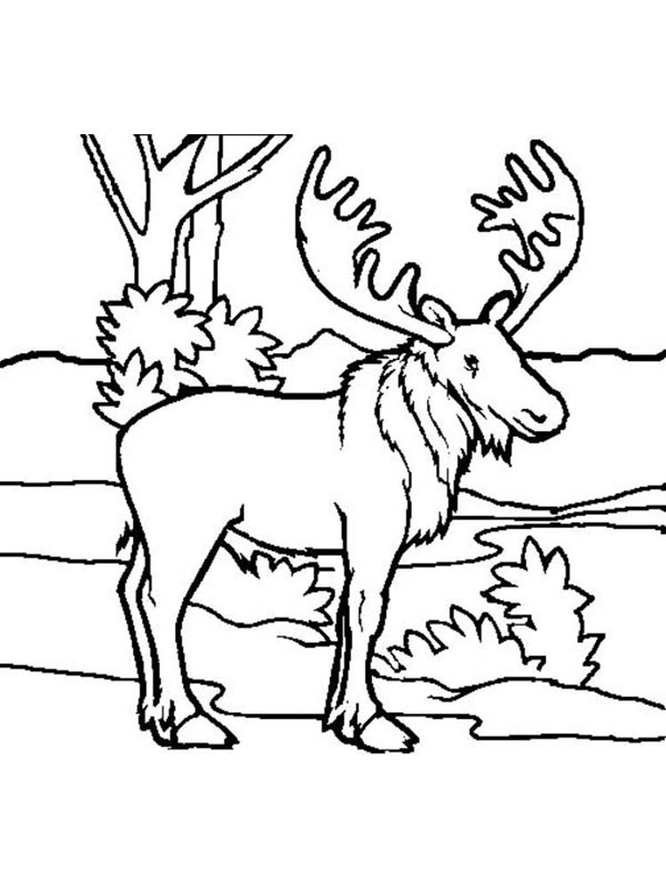 Moose Head Coloring Pages