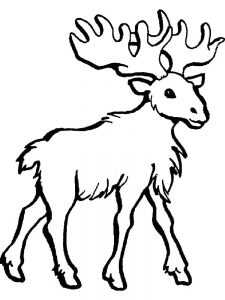 Moose Image To Color