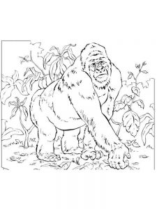 Mountain Gorilla Coloring Pages