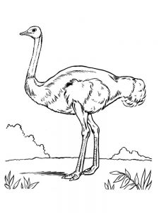 Ostrich Coloring Pages Free