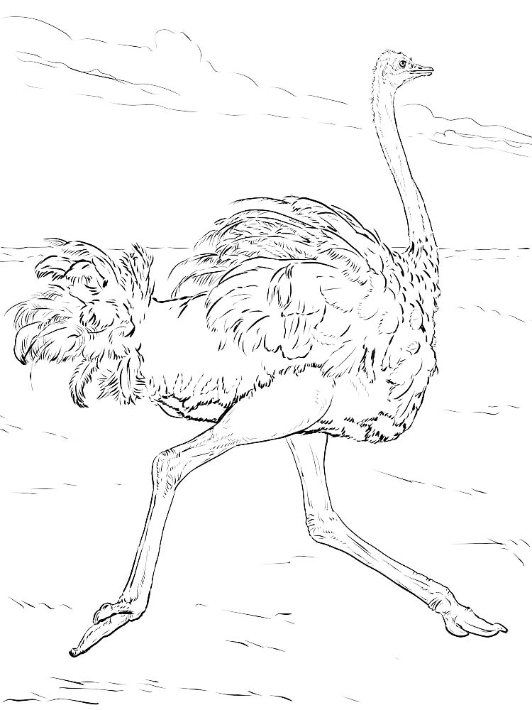 Ostrich Coloring Pages To Print