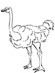 Ostrich Printable Coloring Pages