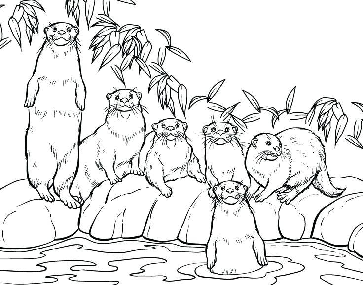 Otter Family Coloring Pages