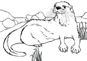 Otter Lutra Canadensis Coloring Page