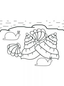 Oyster Shell Coloring Page