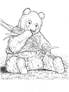 Panda Bear Coloring Pages Printable