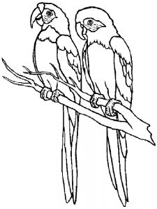 Parrot Coloring Pages Free Printable