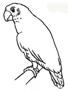 Parrot Coloring Pages Online