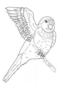 Parrot Coloring Pages Pdf