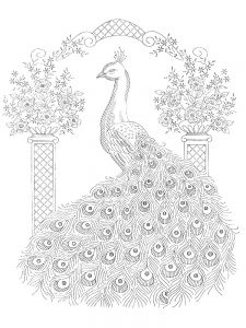 Peacock Animal Coloring Pages