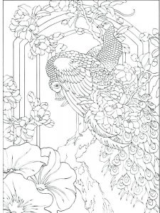 Peacock Coloring Book Pages
