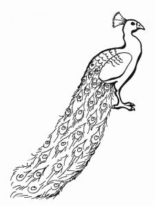 Peacock Coloring Pages 034
