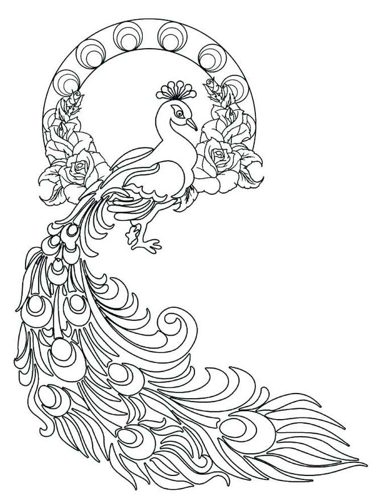 Peacock Coloring Pages 035
