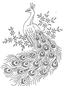 Peacock Coloring Pages 036