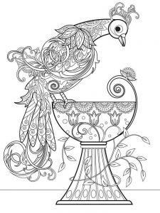 Peacock Coloring Pages 037