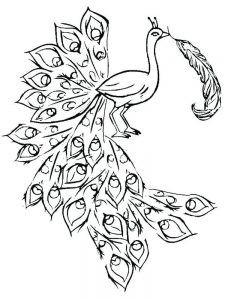 Peacock Coloring Pages 044
