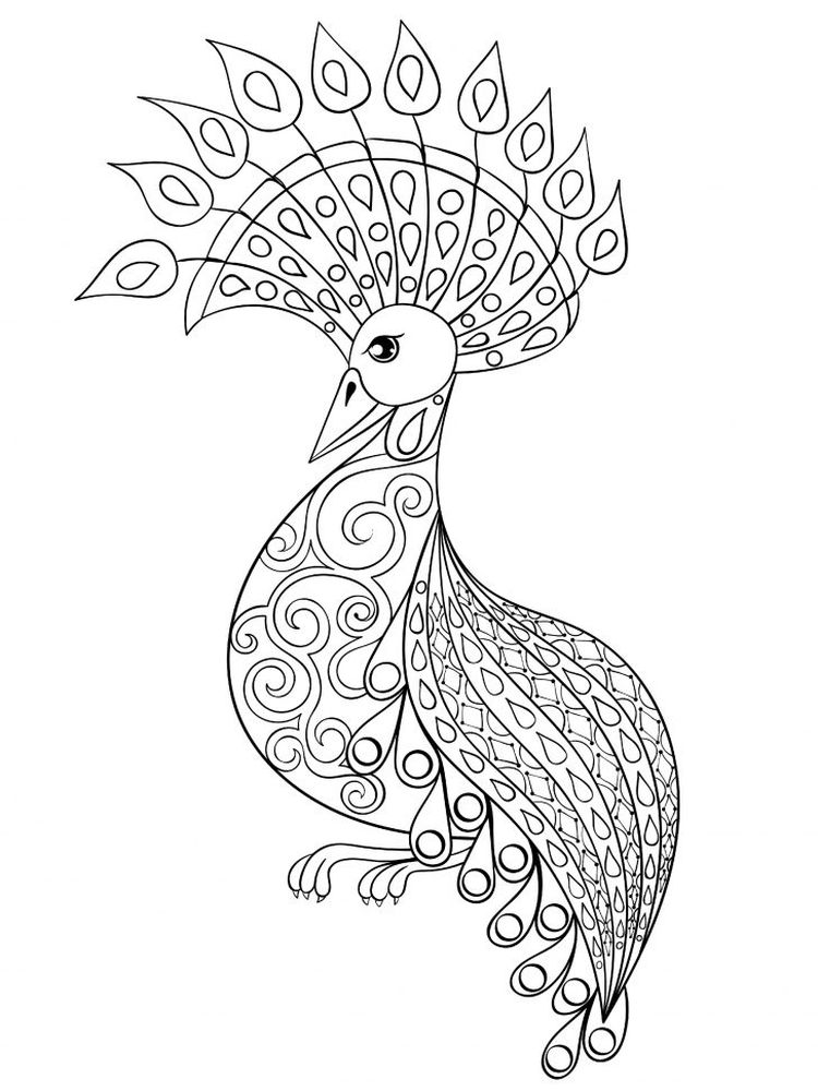 Peacock Coloring Pages 045