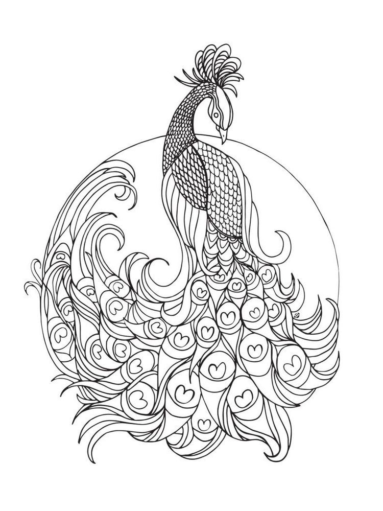 Peacock Coloring Pages Pdf