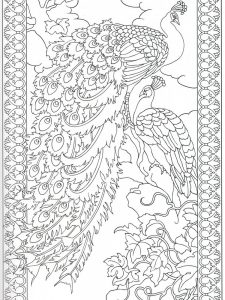 Peacock Coloring Pages Preschool Printable