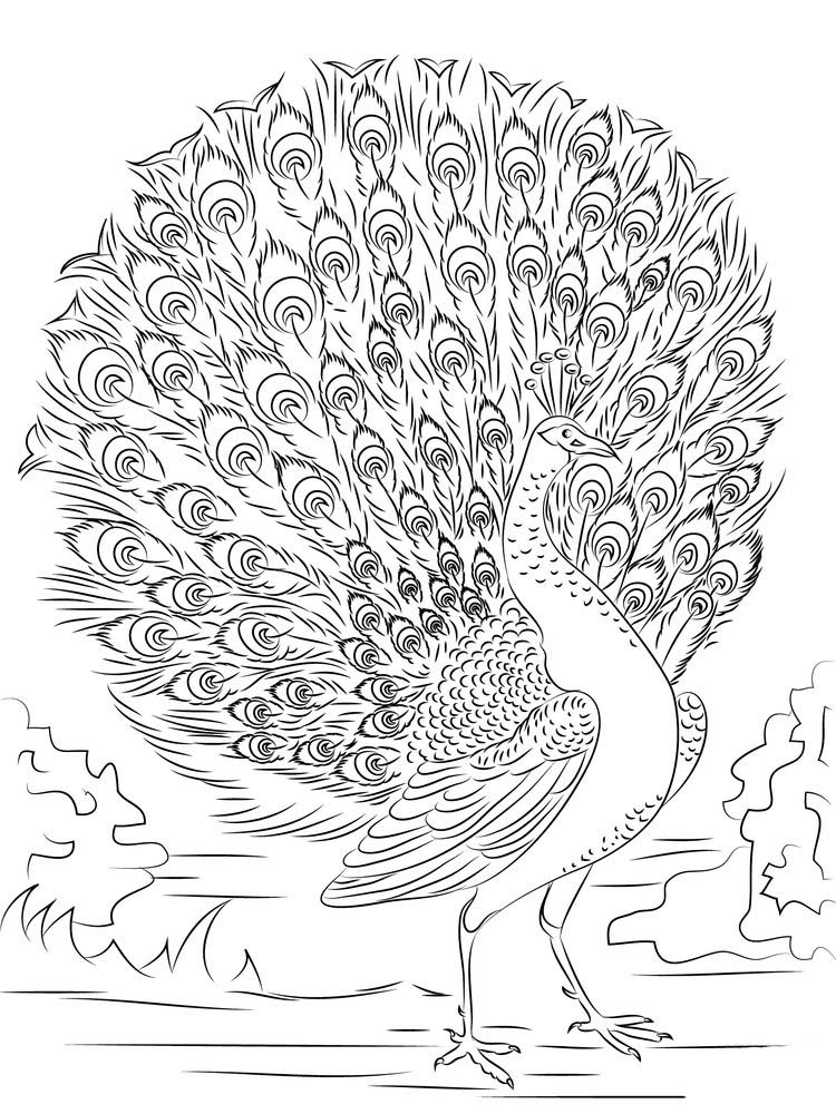 Peacock Colouring Pages Free