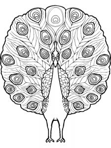 Peacock Mandala Coloring Pages