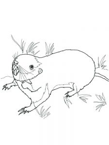 Pet Rat Coloring Pages