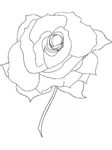 Picture Of A Rose Coloring Page