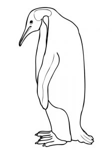 Pictures Of Penguins Coloring Pages