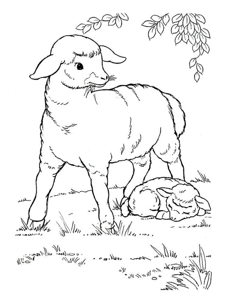 Pictures Of Sheep Coloring Pages