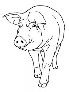 Pig Coloring Pages For Preschoolers