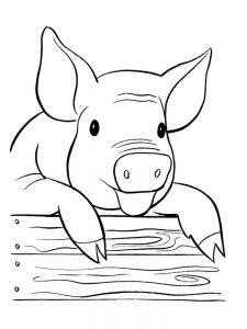 Pig Coloring Pages Pdf
