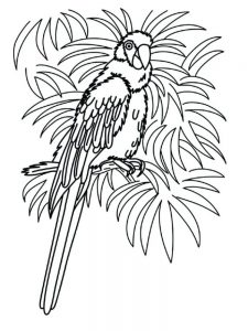 Pittsburgh Pirate Parrot Coloring Pages