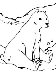 Polar Bear Coloring Pages Images
