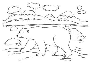 Polar Bear Coloring Pages Photos