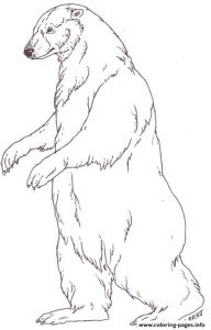 Polar Bear Walking Coloring Pages