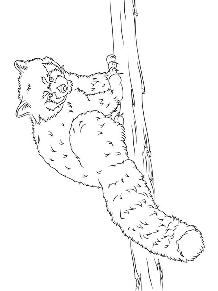Printable Baby Panda Coloring Pages