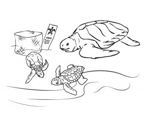 Printable Turtle Coloring Sheet