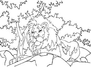 Printable Lion Coloring Pages
