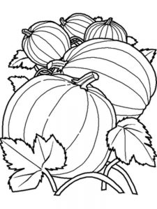 Pumpkin Coloring Pages By Number