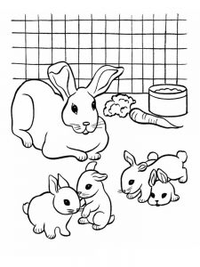 Rabbit Coloring Pages For Adults