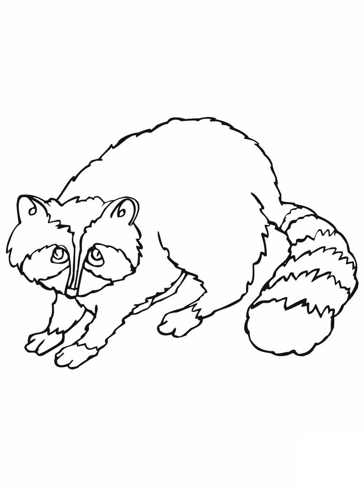 Raccoon Head Coloring Page