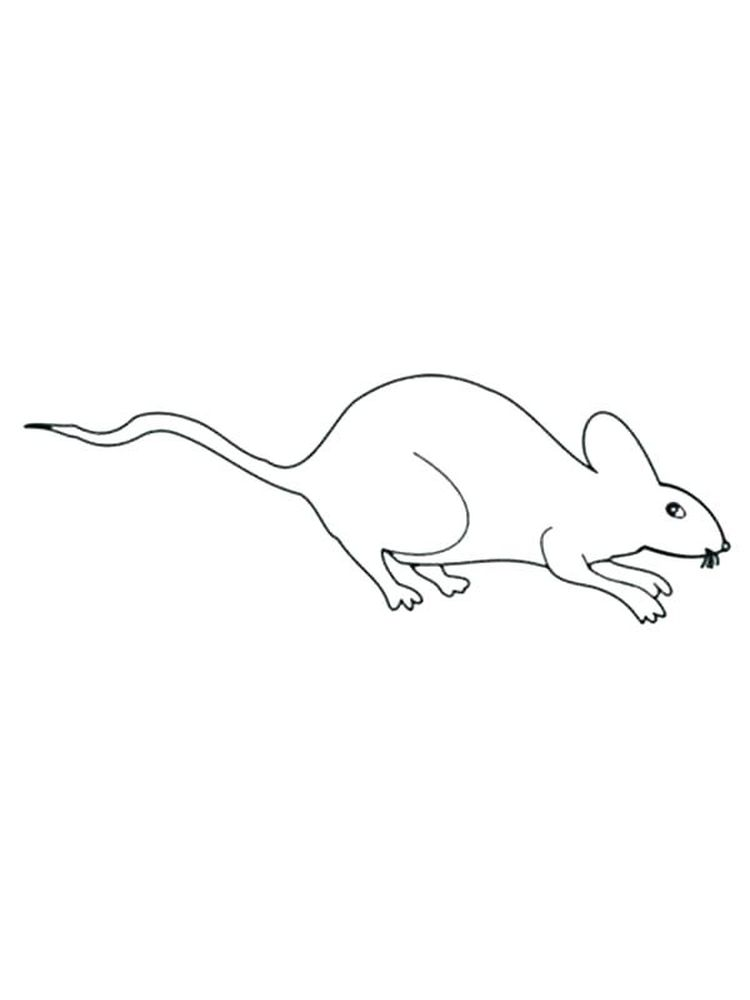 Rat Download Coloring Pages