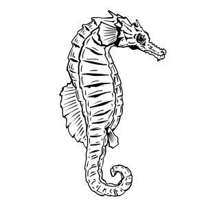 Real Seahorse Coloring Page