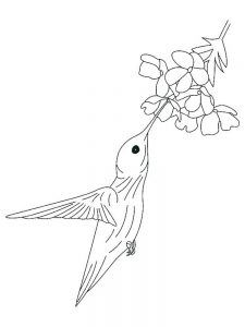 Realistic Coloring Pages Of Hummingbirds