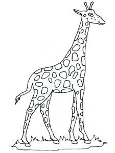 Realistic Giraffe Coloring Pages