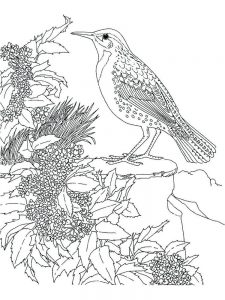 Realistic Hummingbird Coloring Pages