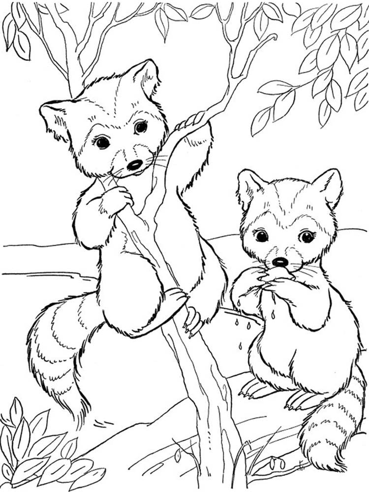 Realistic Raccoon Coloring Page