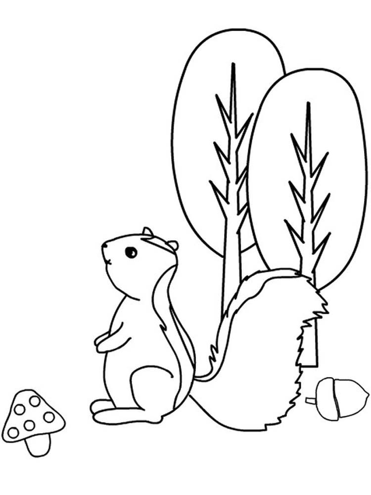 Realistic Skunk Coloring Pages